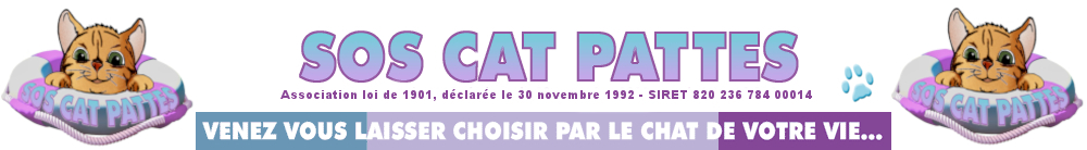 SOS CAT PATTES