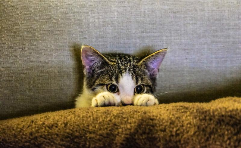 Chat derriere sofa