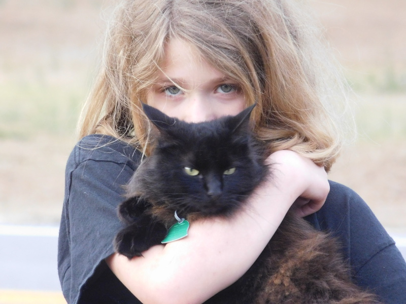 Chat adopte par fillette