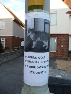 Chat trouvé