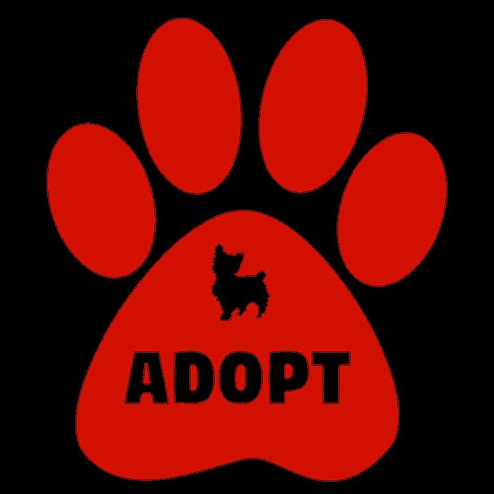 Cat adopt pic