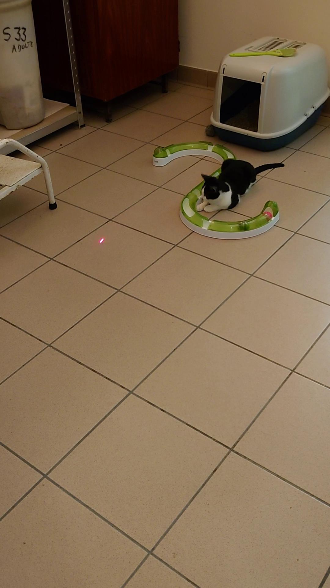 Laser Cat Game