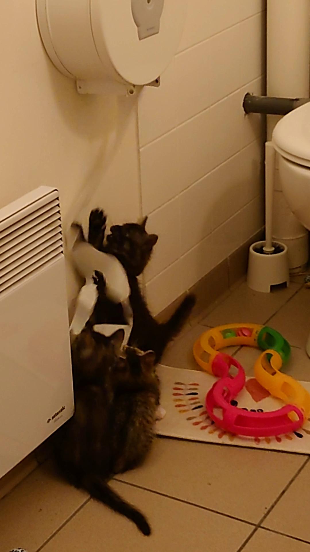 Le papier toilette... c'est chouette !