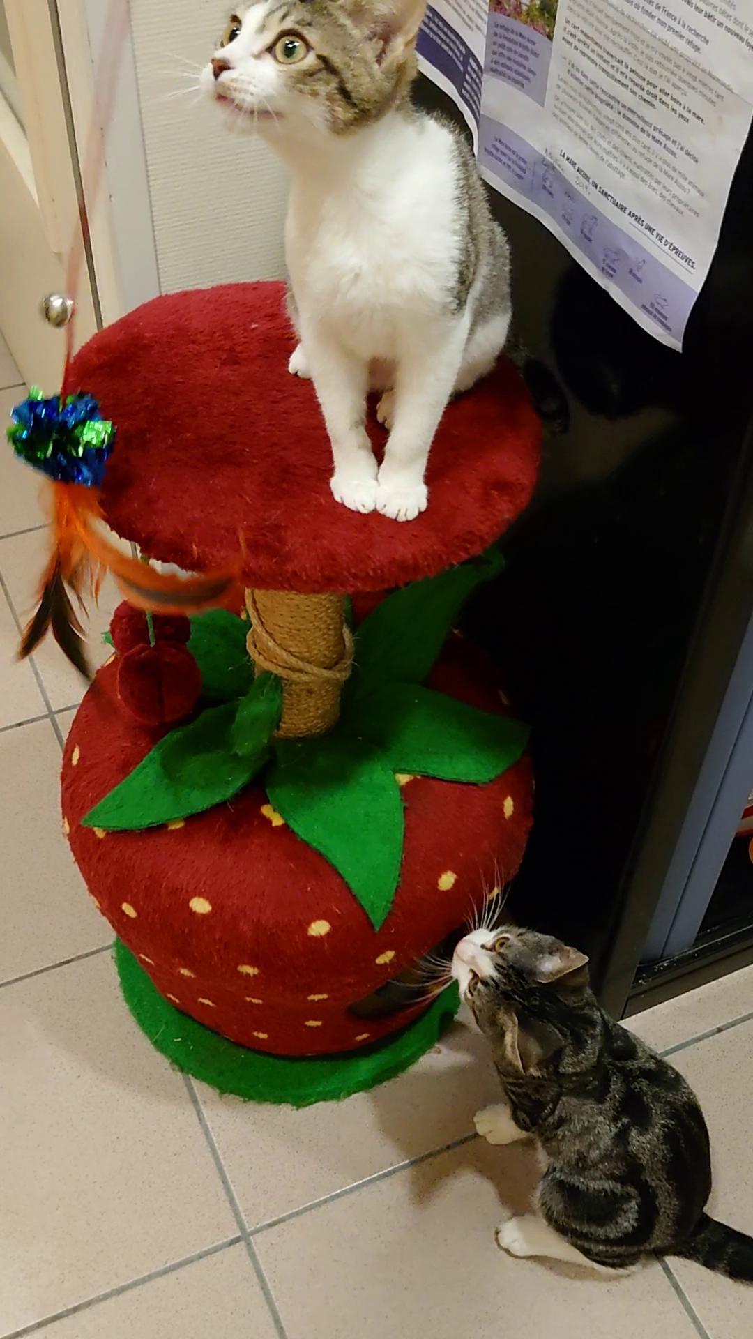 Pê-chat la mouche...